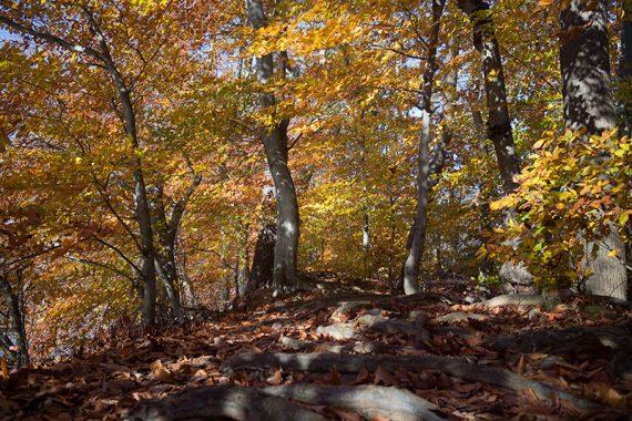 Reservoir Loop trail