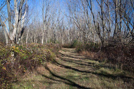 Marlu Trail