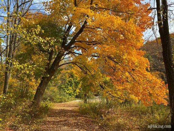 Fall foliage in full swing