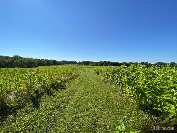 Mowed path through fields