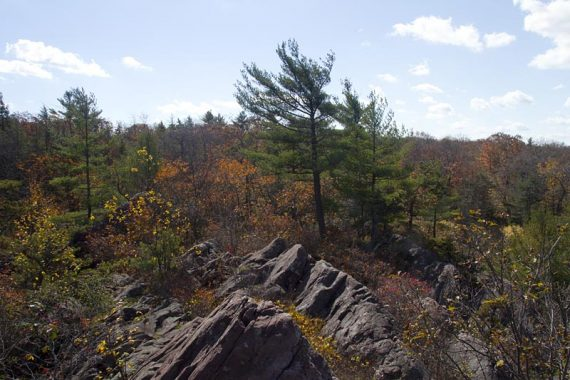 Rocky outcrop and a pine tree