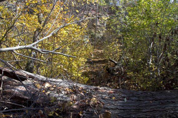 Fallen tree and wet area