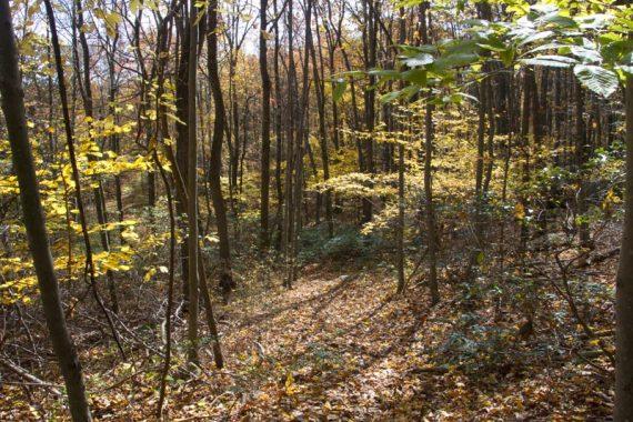 White trail in autumn