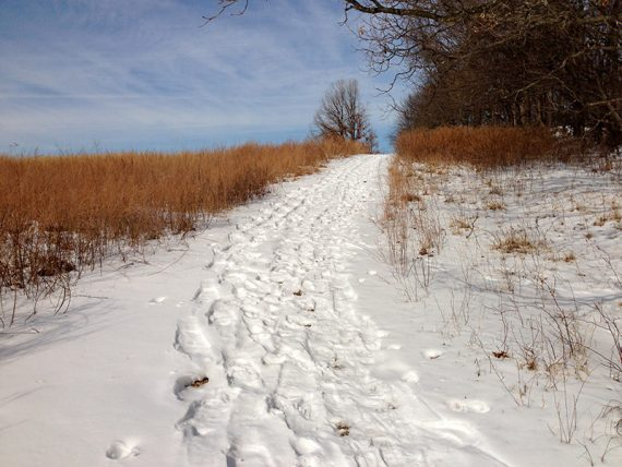 Snowy path surrounded by grasses
