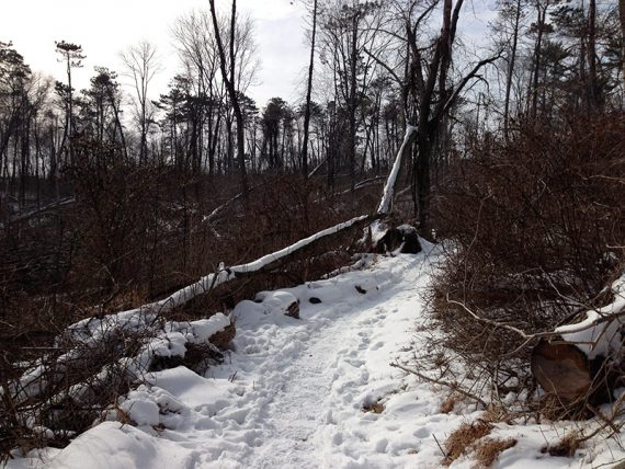 Snow on trail damaged from storms