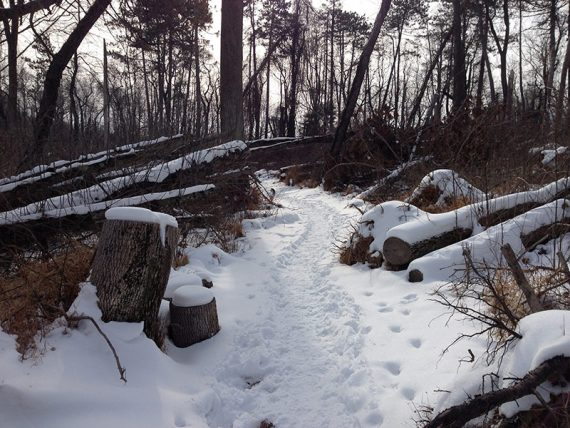 Trail with fallen trees on each side