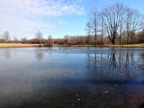 Pond at Sourland