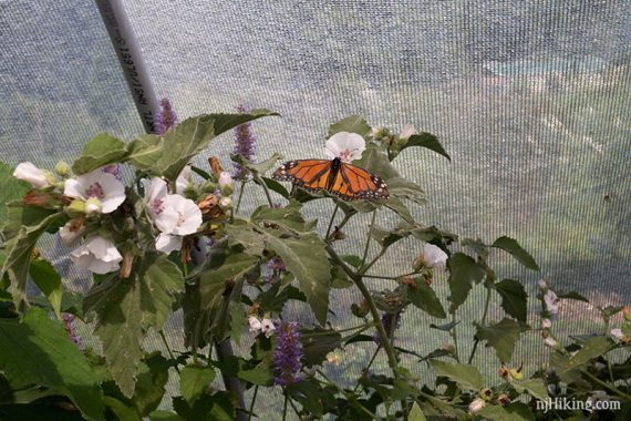 Inside the Butterfly House