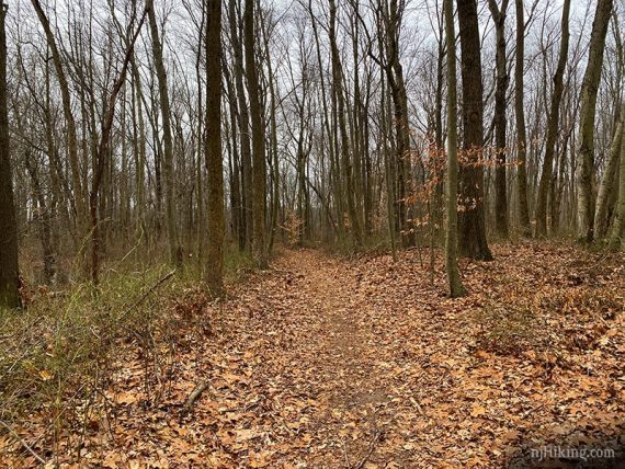 Trail at Van Dyke Farm