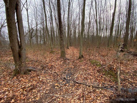 Red trail at Van Dyke Farm