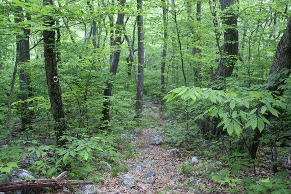 Swenson Trail