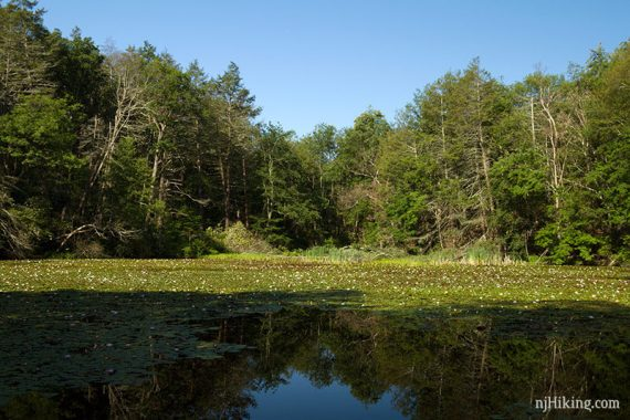 Lake Lenape in July