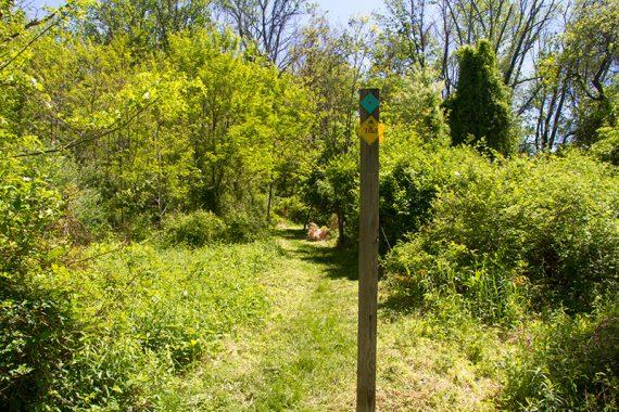 Ridge/Highlands, past the Pine Run crossing