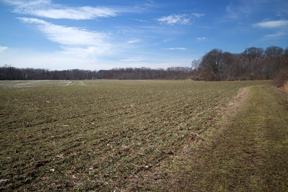 Large open field along Rocky Brook trail