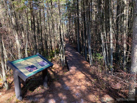 Tom's Trail cedar swamp
