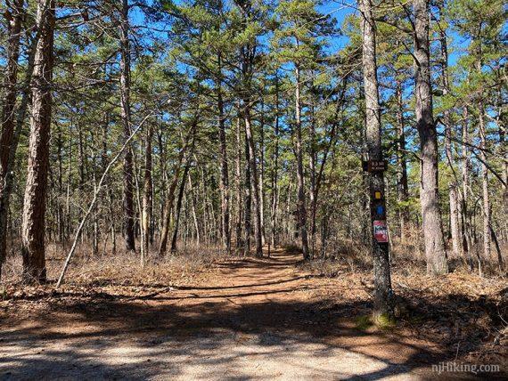 Tom's Trail trailhead