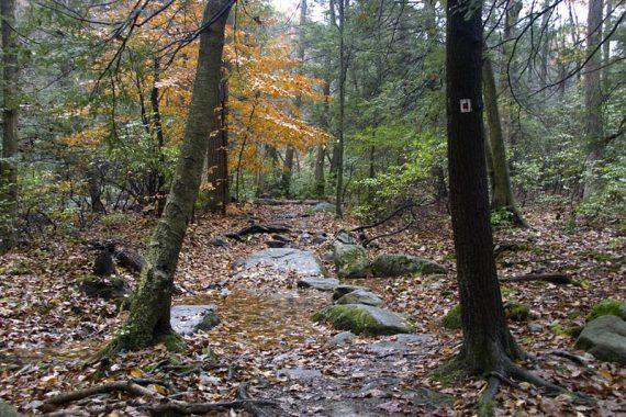Pine Meadows trail