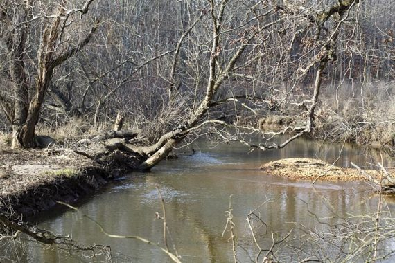 Mantua Creek Trail