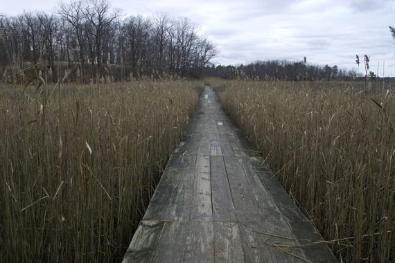 Blue trail through a marsh