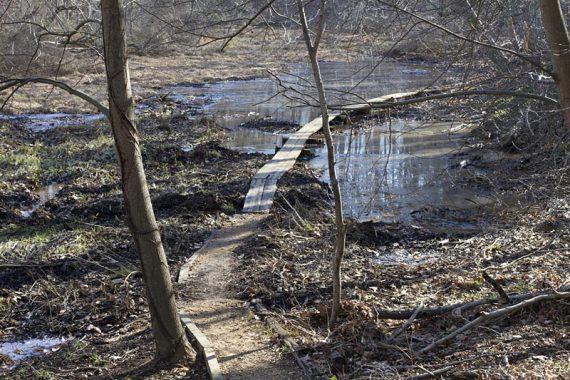 Monongahela Brook Trail