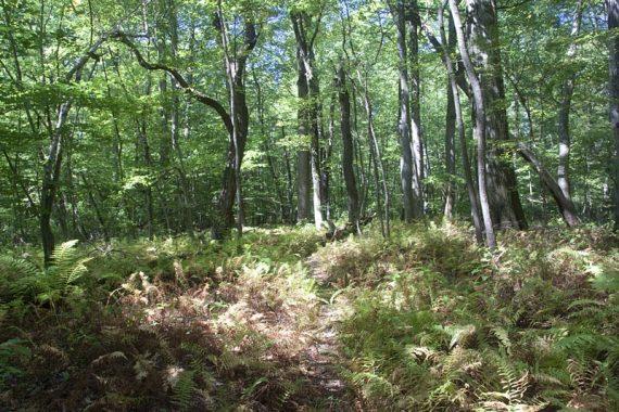 Red Trail loop