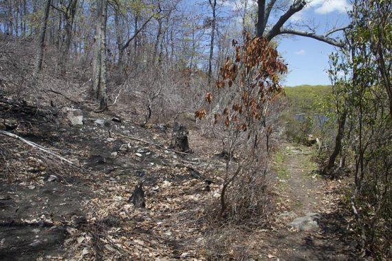 Fire damage on the Appalachian Trail