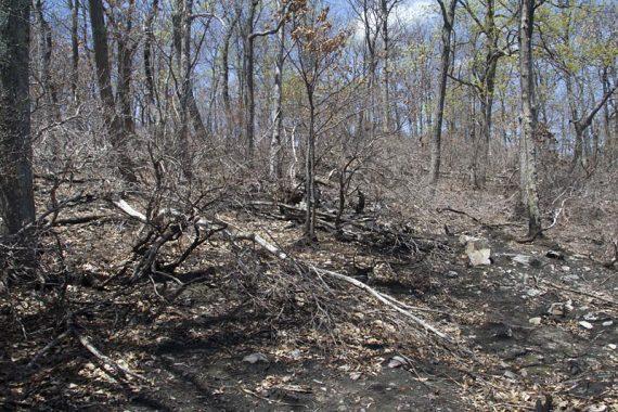 Fire damage near the pond