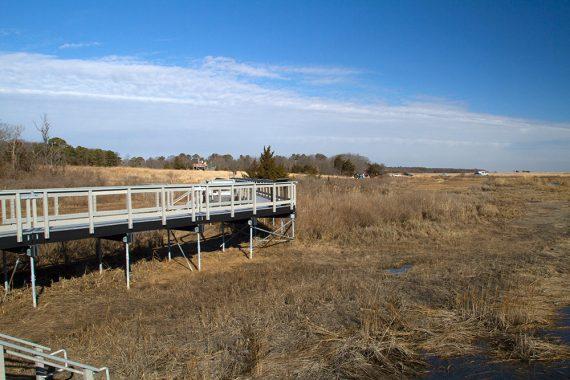 Eco Trail boardwalk