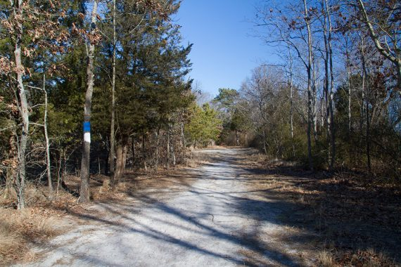 Jen's Trail