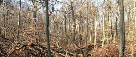 Large area of blow downs blocking the trail