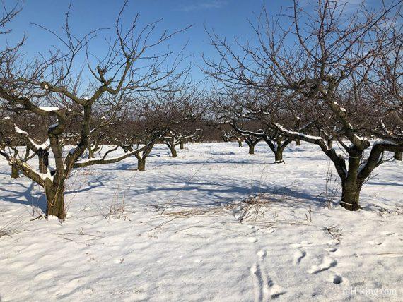 Orchard - Hedgerow & Parsonage