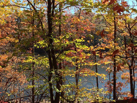 Westons Pond through fall foliage.