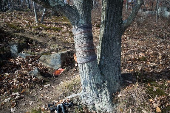 Knit sweater on a tree