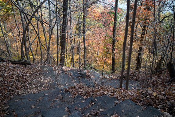 Steep steps heading down Forest View trail.