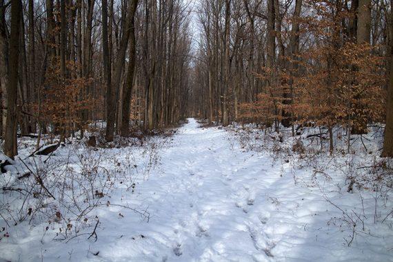 Brown trail