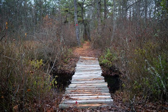 Wooden bridge on the RED trail