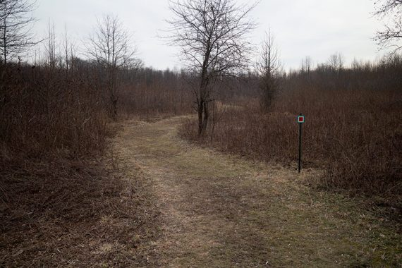 Red is a short trail through a meadow