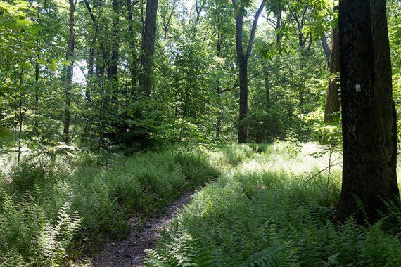 WHITE (Deer Path)