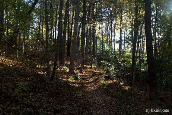 WHITE trail