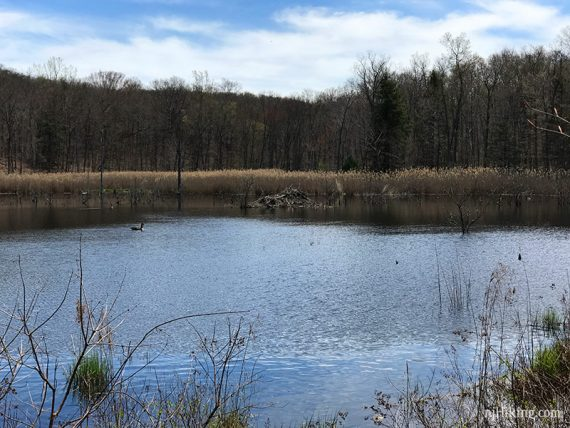 Beaver Dam at Jennings Hollow