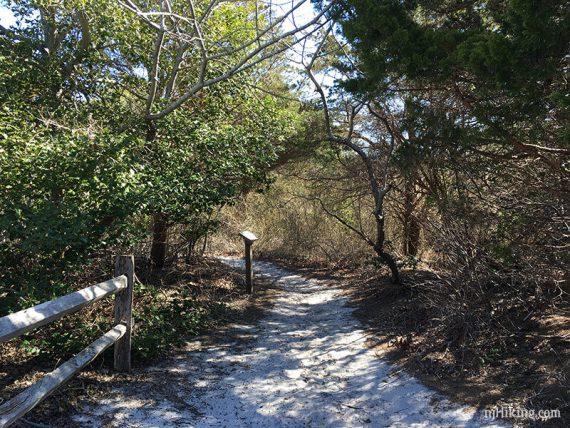 Johnny Allen's Cove Trail