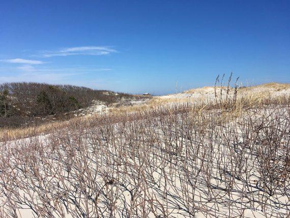 Cranberry Trail