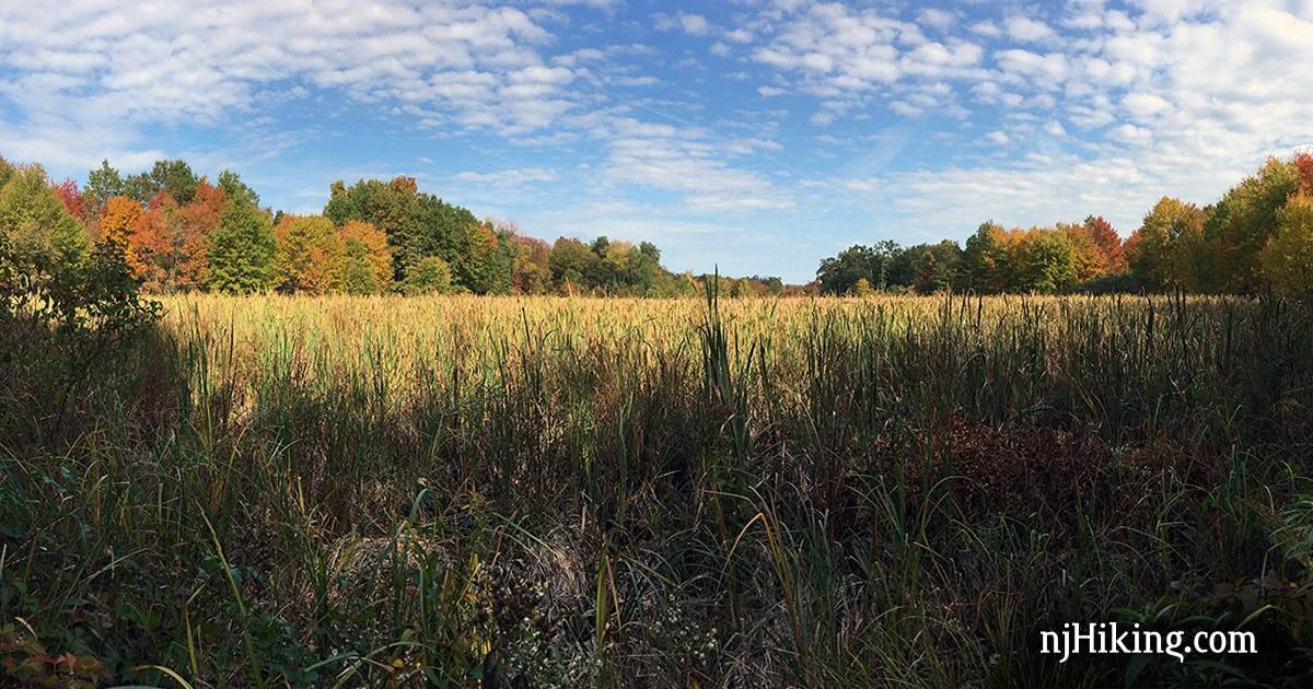 Great Swamp – Orange Trail   njHiking.com