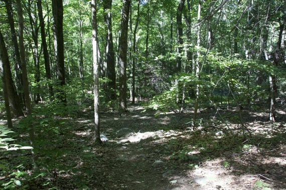 Wawayanda trails are mostly level and easy.