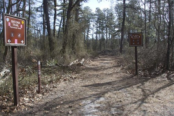 Mt Misery trail junction