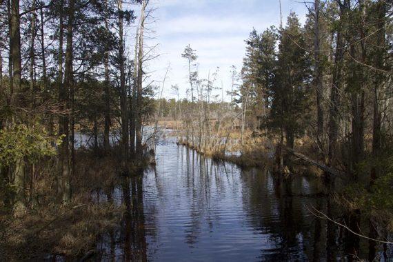 Pakim Pond