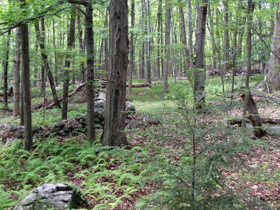 Old stone walls along the trail.