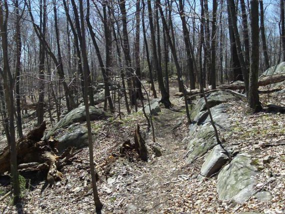 White Trail (Lower)