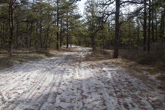 Mt Misery trail