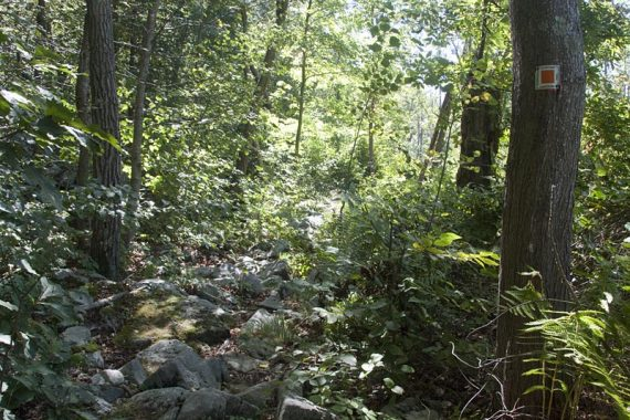 Brief rocky section of the Pumphouse Trail